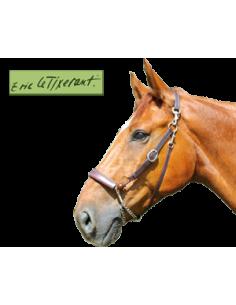 Equilicol Eric Le Tixerant