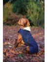 Manteau Kentucky pour chien