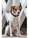 Collier pour chien Kentucky Corduroy