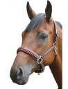 Licol Privilège Equitation Royan
