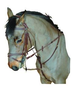 Privilège Equitation Smart Gogue