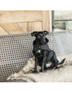 Manteau Kentucky pour chien noir