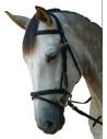 Bridon Privilège Equitation Royan muserolle combinée