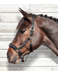 Equiline Headcollar + Rope